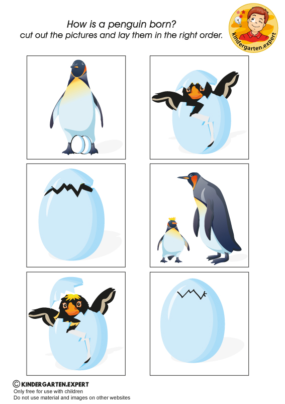 Sequence Cards, North Pole and South Pole theme, kindergarten expert, free printable