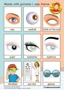 Eye words with pictures 1, eye theme, kindergarten expert, free printable